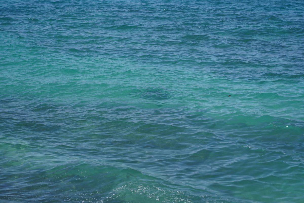 港から見たウミガメ1
