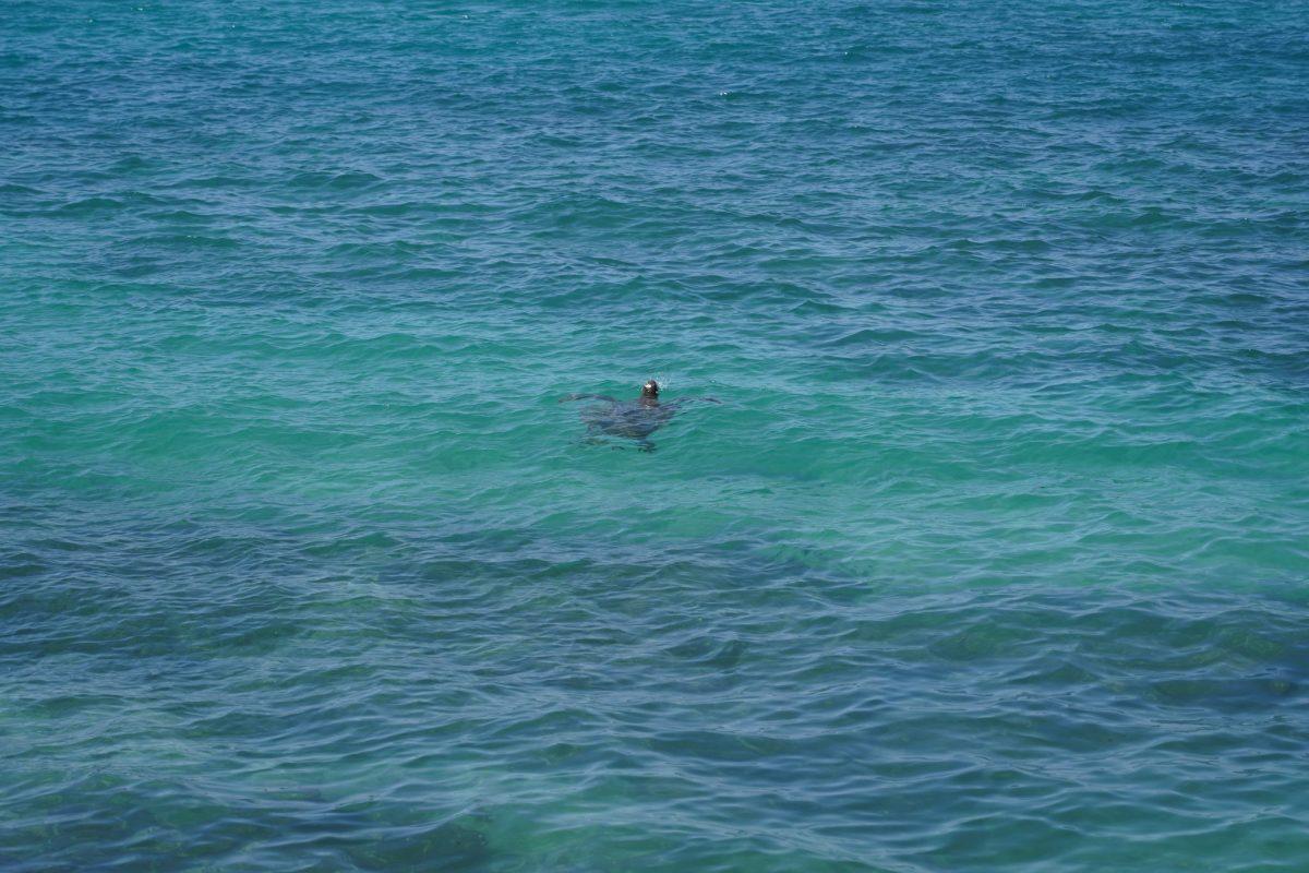 港から見たウミガメ2